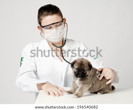 Vet examinee a little puppy dog - isolated over a white background - stock photo