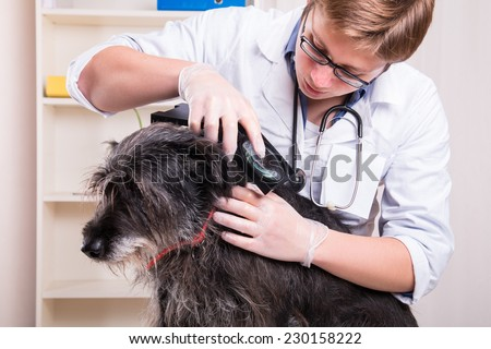 Vet examines the dog's hair and looking for parasites  - stock photo