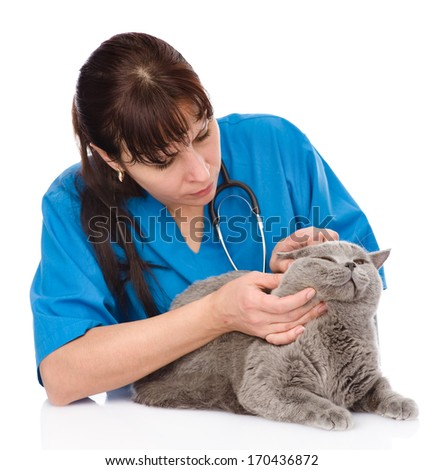 Vet examining a cat's ear. isolated on white background