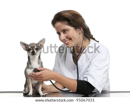 Vet examining a Chihuahua with a stethoscope in front of white background - stock photo