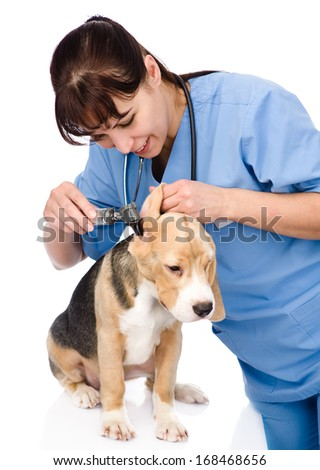 Vet examining a dog's ear with an otoscope. isolated on white background