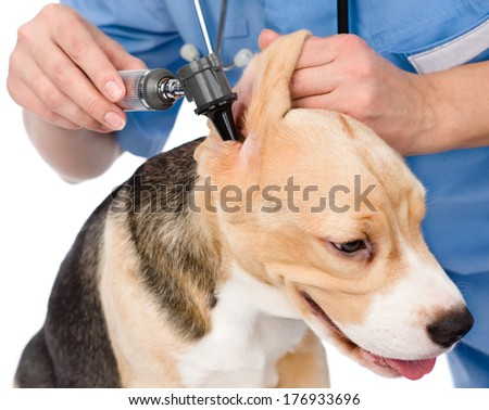 Vet examining a dog's ear with an otoscope. isolated on white background - stock photo