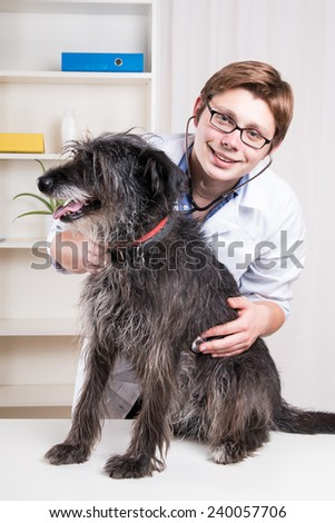 Vet examining a dog with a stethoscope   - stock photo