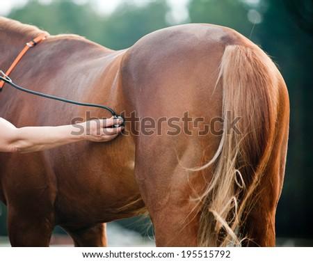 Vet examining horse - stock photo