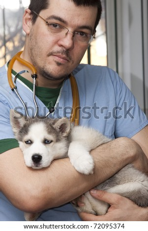 Vet examining husky puppy at a small animal clinic - stock photo
