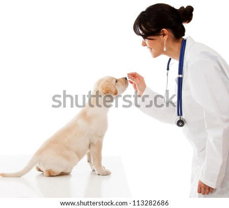 Vet giving a treat to a good dog - isolated over a white background