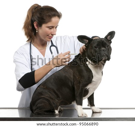 Vet giving an injection to a Crossbreed dog, dog in front of white background
