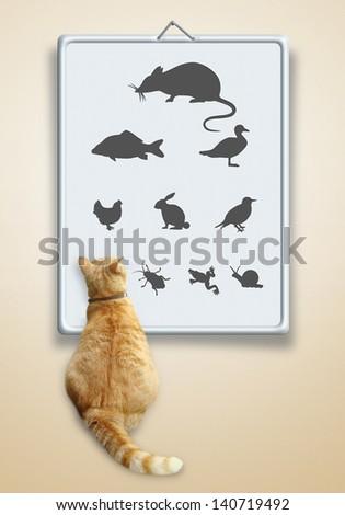 Vet optometry chart for cats - stock photo