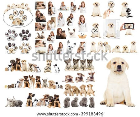 vet set - stock photo