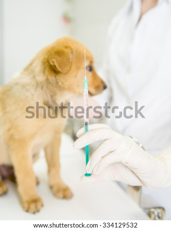 vet with syringe doing vaccination dog - stock photo
