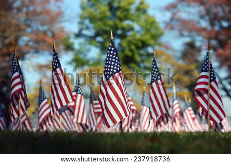 Veterans Day Flags - stock photo