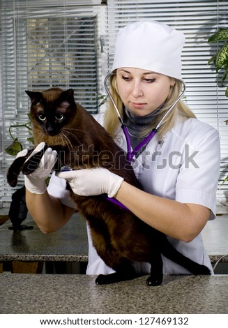 Veterinarian doctor making a checkup of a cat - stock photo