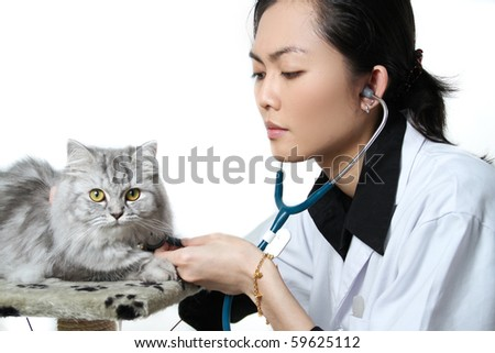 veterinarian doctor making a medical checkup of a persian cat - stock photo