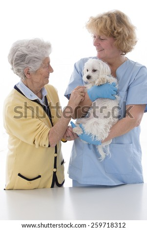veterinarian doctor making check-up of a little doc - stock photo