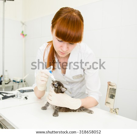 veterinarian dripping drops to the kitten eye in clinic