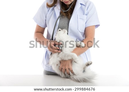 veterinarian examines a cat on white background isolated - stock photo