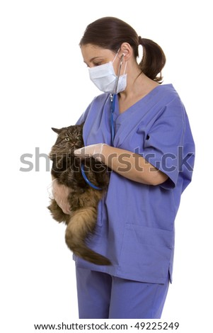 Veterinarian examining a cat - stock photo