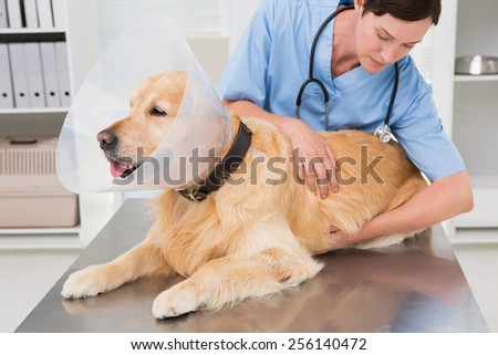 Veterinarian examining a cute dog in medical office - stock photo