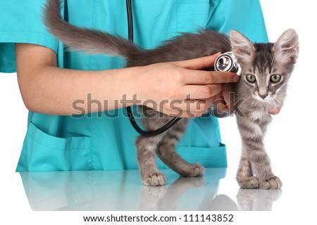 Veterinarian examining a kitten on blue background - stock photo