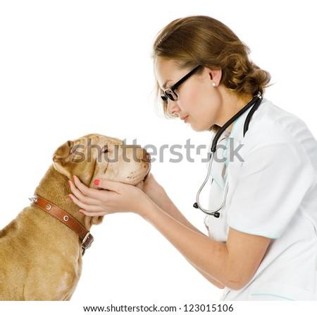 veterinarian examining dog. isolated on white background - stock photo