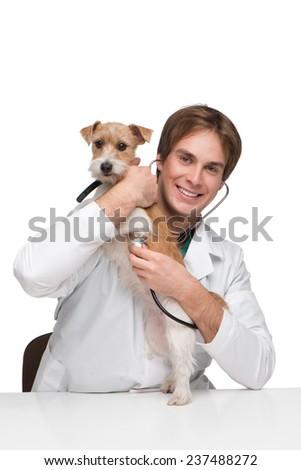 Veterinarian examining little terrier - stock photo