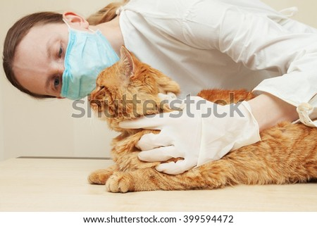 Veterinarian examining teeth of a cat while doing checkup at clinic. - stock photo