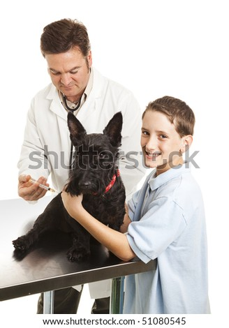 Veterinarian giving a shot to a little boy's Scotty dog.  White background. - stock photo