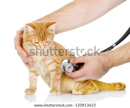 Veterinarian hand examining a cat. isolated on white background - stock photo