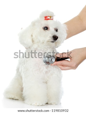 Veterinarian hand examining a  dog. isolated on white background - stock photo