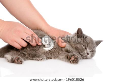 Veterinarian hand examining a kitten. isolated on white background - stock photo