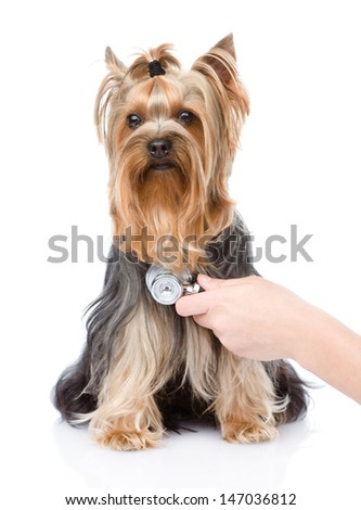 Veterinarian hand examining a puppy. Focus on the hand. isolated  - stock photo