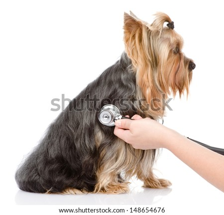 Veterinarian hand examining a puppy. isolated on white background