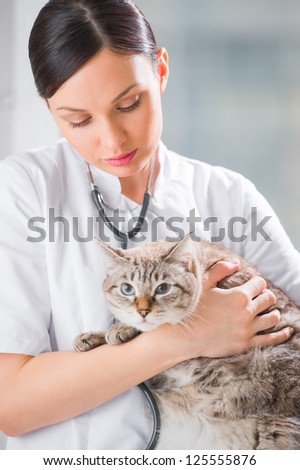 Veterinarian holding a cat at clinic - stock photo