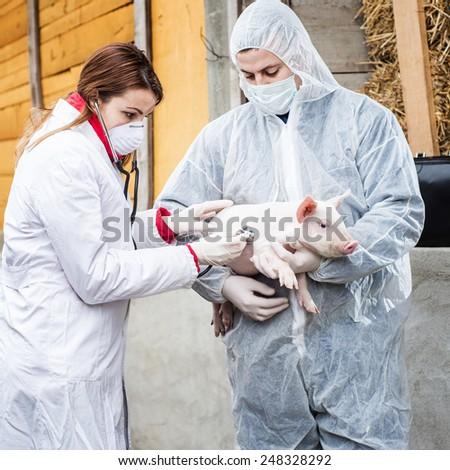 Veterinarian holding a pig while nurse giving the vaccine.