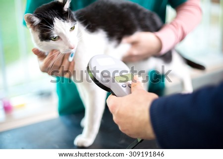 Veterinarian identify cat by microchip implant - stock photo