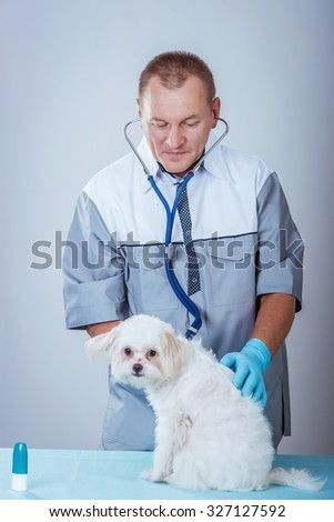 veterinarian is holding a dog. Veterinary clinic.
