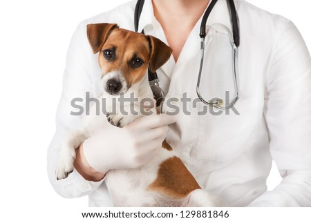 Veterinarian male in a white coat with a stethoscope holding a small cute Jack Russel terrier dog on a white background. Dog stares at the camera. Studio shot.