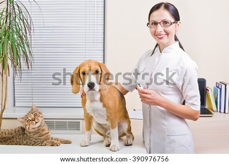 Veterinarian measures the body temperature of a dog and cat - stock photo