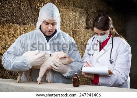 Veterinarian treatment. - stock photo