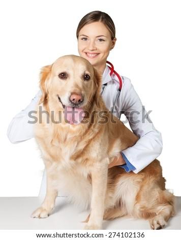 Veterinarian, vet, dog. - stock photo