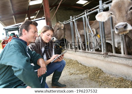 Veterinarian with breeder checking on herd - stock photo