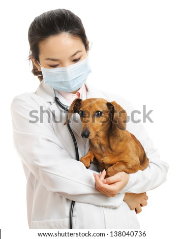 Veterinarian with dachshund dog - stock photo