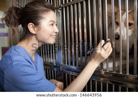 Veterinarian with dog - stock photo