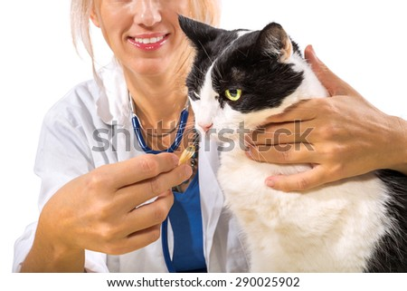 Veterinarian woman doctor giving medicine to a cat on white background.