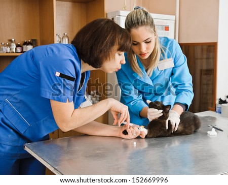veterinarians injection cat in veterinary station - stock photo
