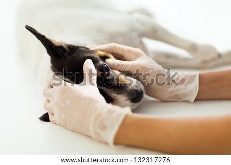 veterinary assistant checking pet dog eye - stock photo