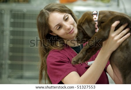 veterinary assistant moving a young patient - stock photo