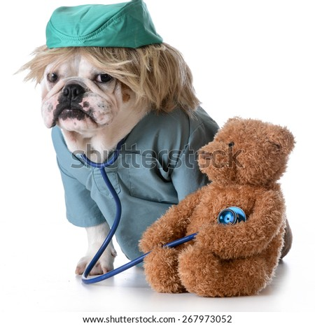 veterinary care - bulldog dressed like a doctor listening to the heart of a stuffed bear  - stock photo