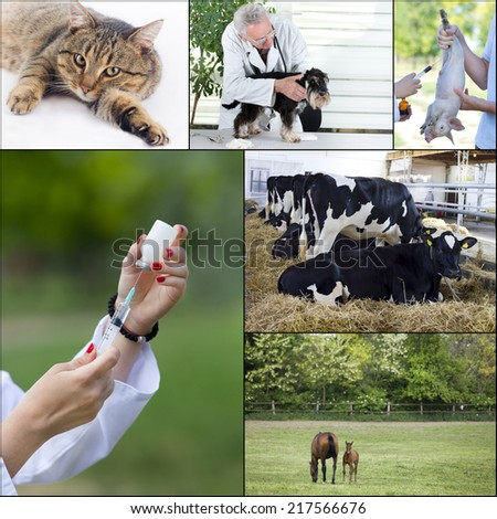 Veterinary care of pets and farm animals collection - stock photo