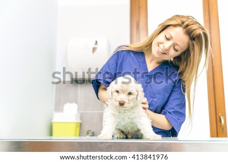 Veterinary checking a dog puppy in her studio - stock photo